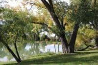 nebraska state tree